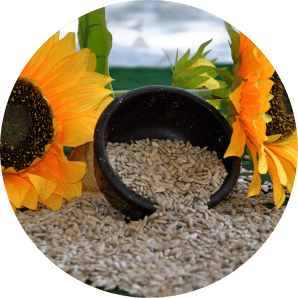 Sadina sunflowers and kernels